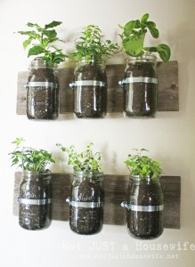 Glass Jar Herb Garden