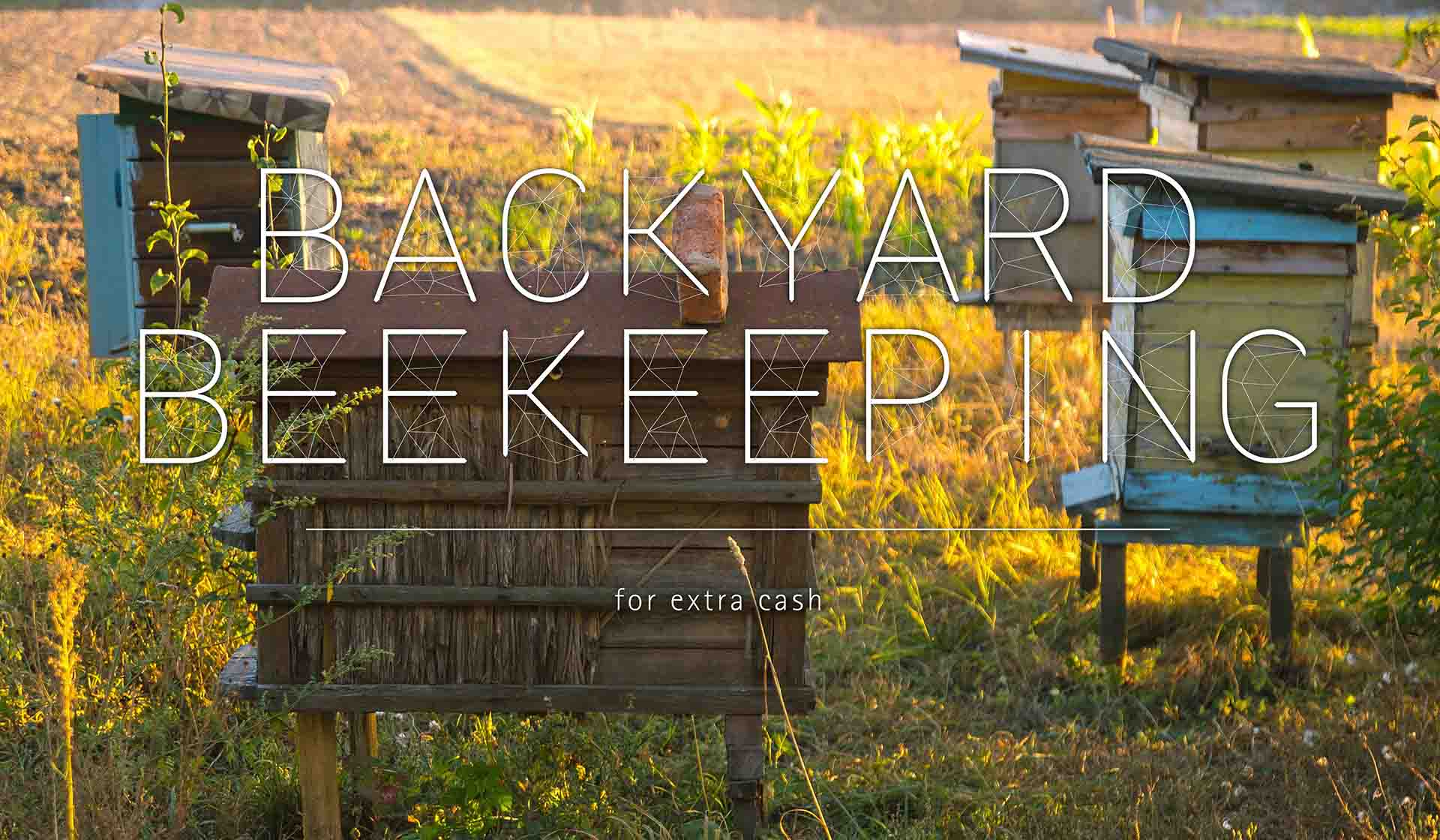 Backyard Beekeeping For Extra Cash
