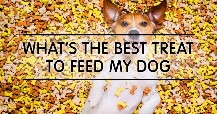 What's The Best Treat To Feed My Dog?