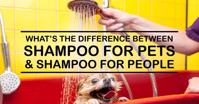 What's the Difference Between Shampoo for Pets and Shampoo for People?
